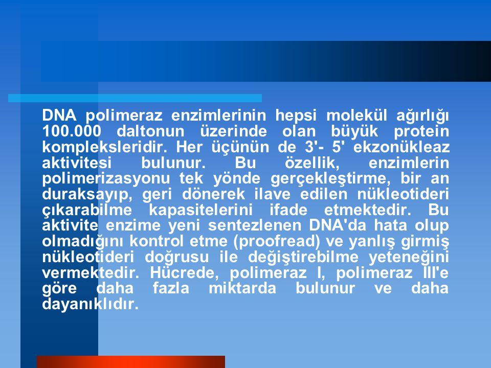 DNA polimeraz enzimlerinin hepsi molekül ağırlığı 100