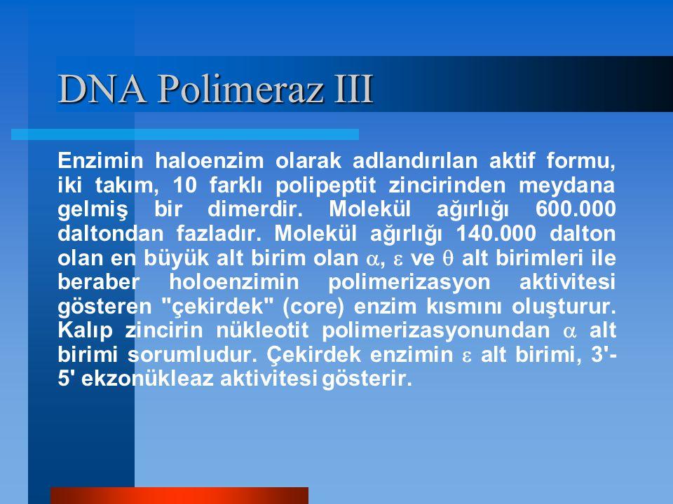 DNA Polimeraz III