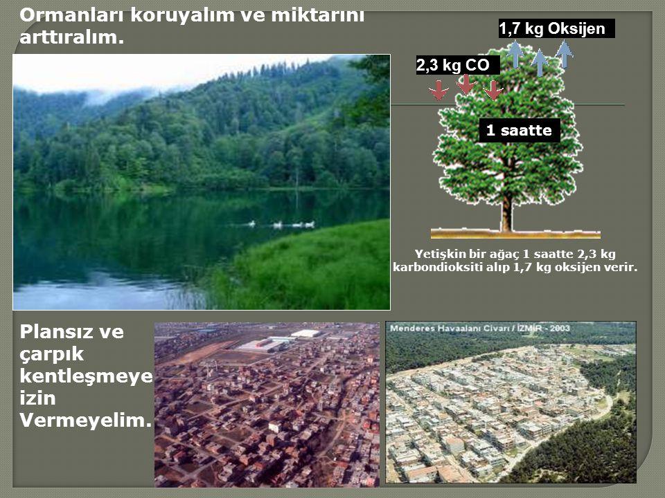 Ormanları koruyalım ve miktarını arttıralım.