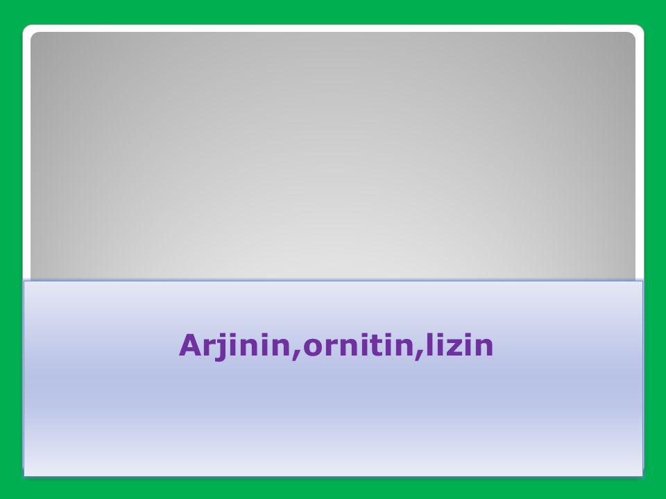 Arjinin,ornitin,lizin