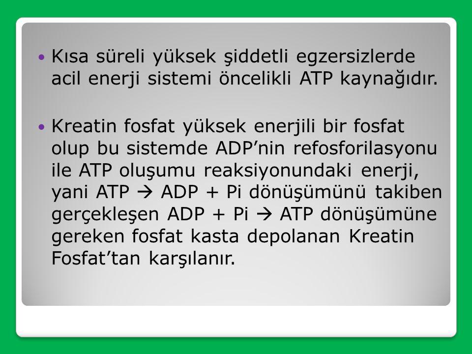 Kısa süreli yüksek şiddetli egzersizlerde acil enerji sistemi öncelikli ATP kaynağıdır.