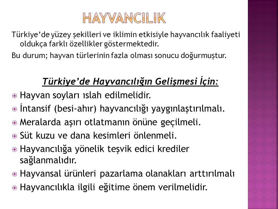 Türkiye'de Hayvancılığın Gelişmesi İçin: