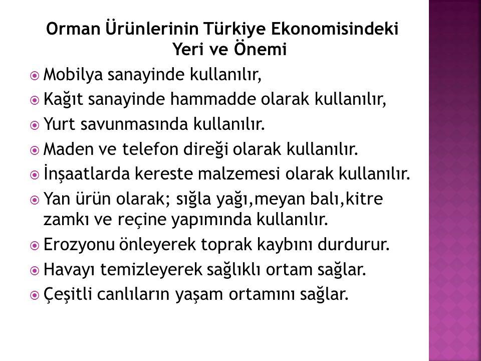 Orman Ürünlerinin Türkiye Ekonomisindeki Yeri ve Önemi