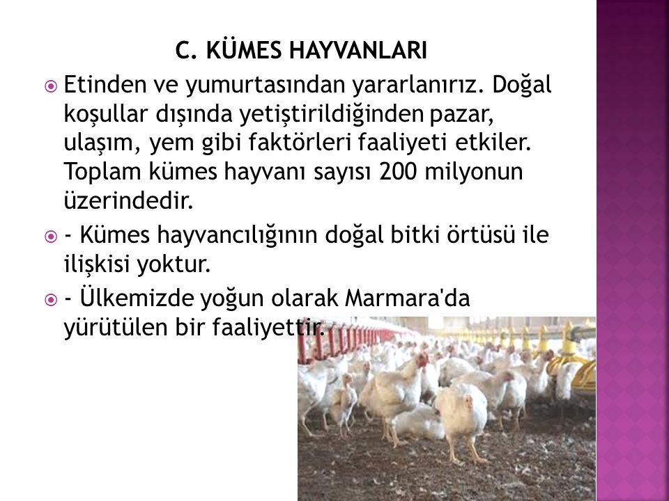 C. KÜMES HAYVANLARI