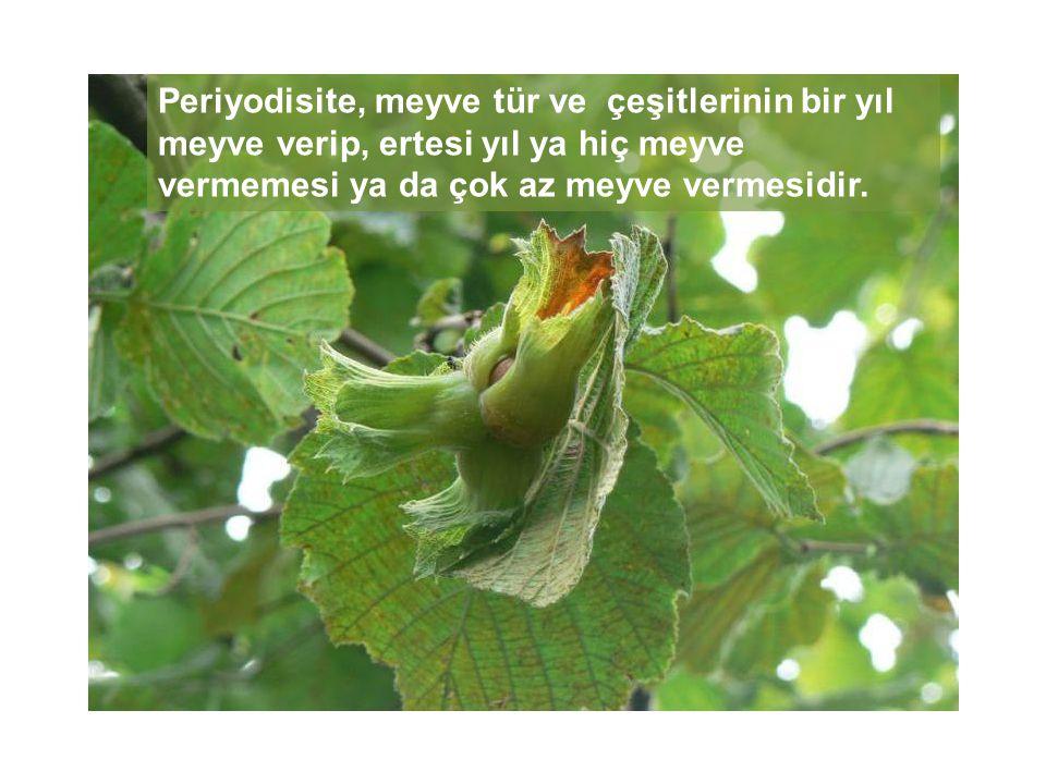 Periyodisite, meyve tür ve çeşitlerinin bir yıl meyve verip, ertesi yıl ya hiç meyve vermemesi ya da çok az meyve vermesidir.
