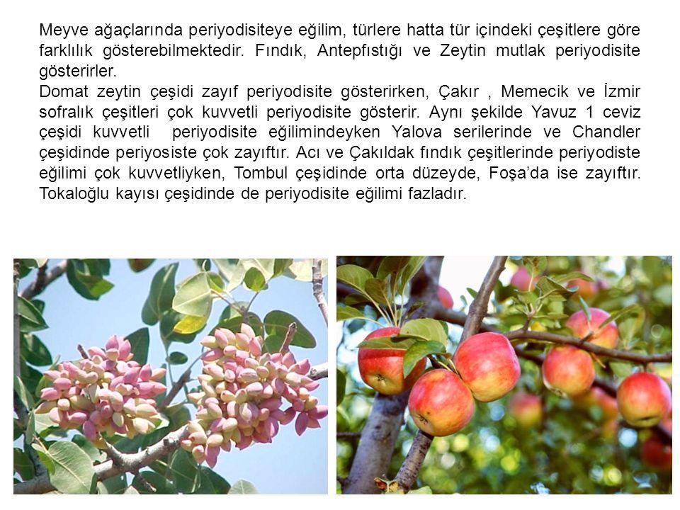 Meyve ağaçlarında periyodisiteye eğilim, türlere hatta tür içindeki çeşitlere göre farklılık gösterebilmektedir. Fındık, Antepfıstığı ve Zeytin mutlak periyodisite gösterirler.