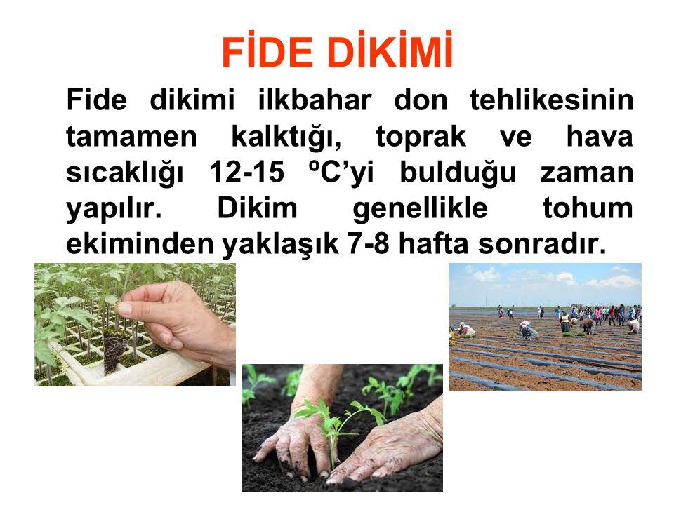 FİDE DİKİMİ