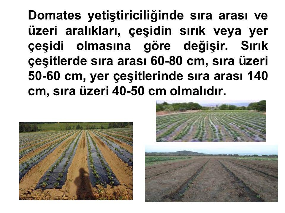 Domates yetiştiriciliğinde sıra arası ve üzeri aralıkları, çeşidin sırık veya yer çeşidi olmasına göre değişir.