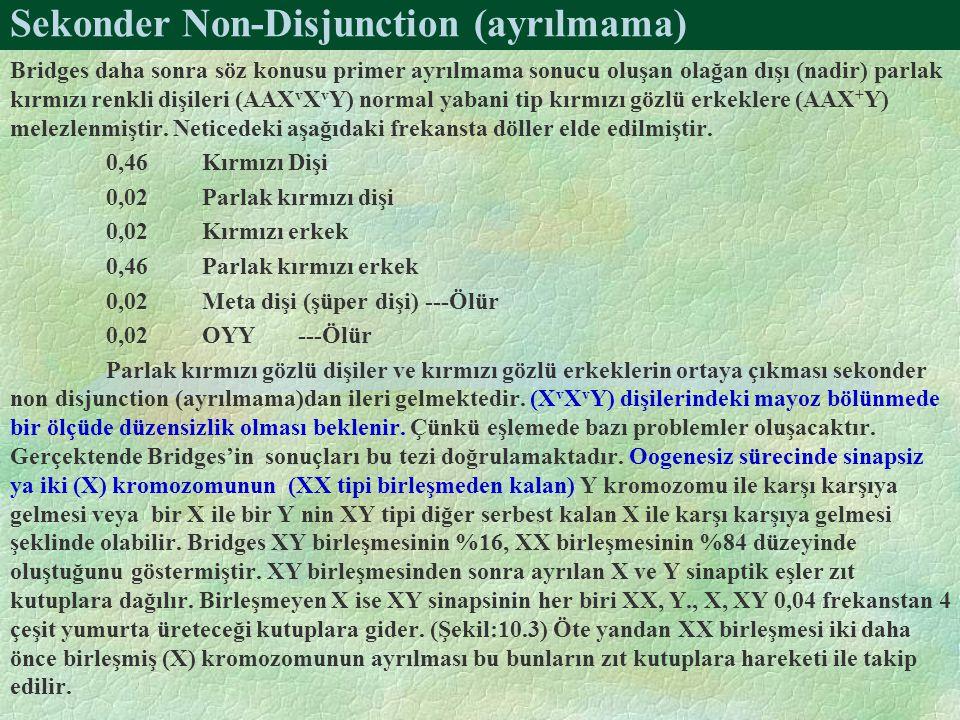 Sekonder Non-Disjunction (ayrılmama)