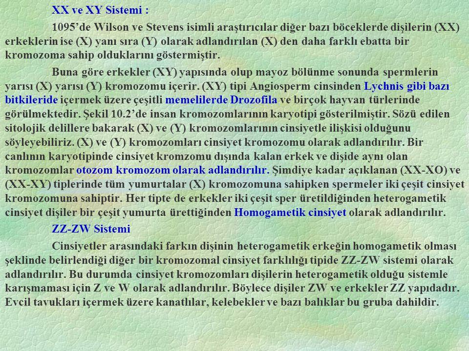 XX ve XY Sistemi :