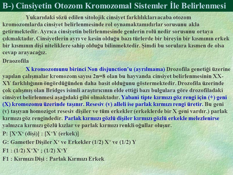 B-) Cinsiyetin Otozom Kromozomal Sistemler İle Belirlenmesi