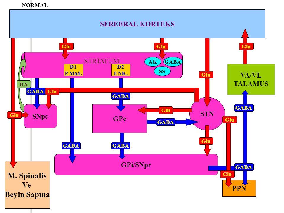 M. Spinalis Ve Beyin Sapına