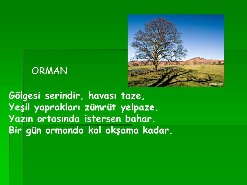 ORMAN Gölgesi serindir, havası taze, Yeşil yaprakları zümrüt yelpaze.