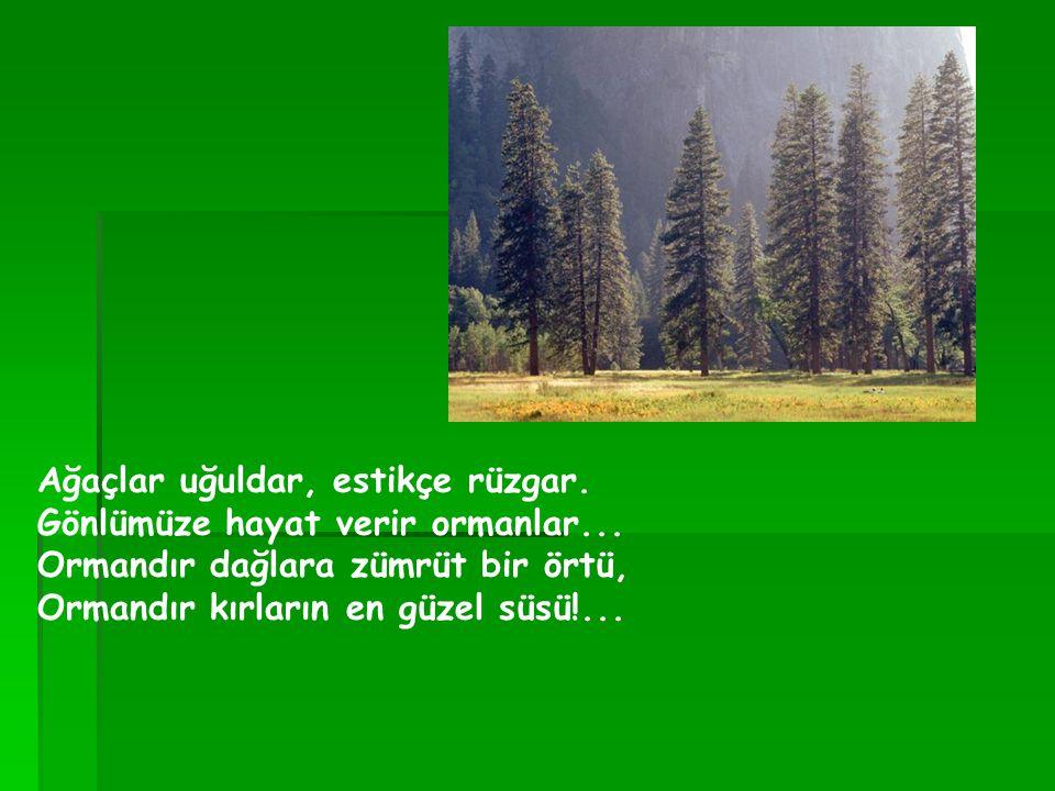 Ağaçlar uğuldar, estikçe rüzgar. Gönlümüze hayat verir ormanlar