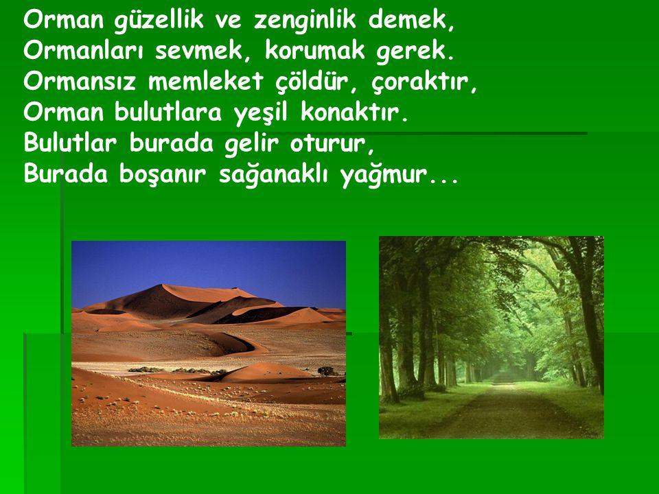 Orman güzellik ve zenginlik demek, Ormanları sevmek, korumak gerek