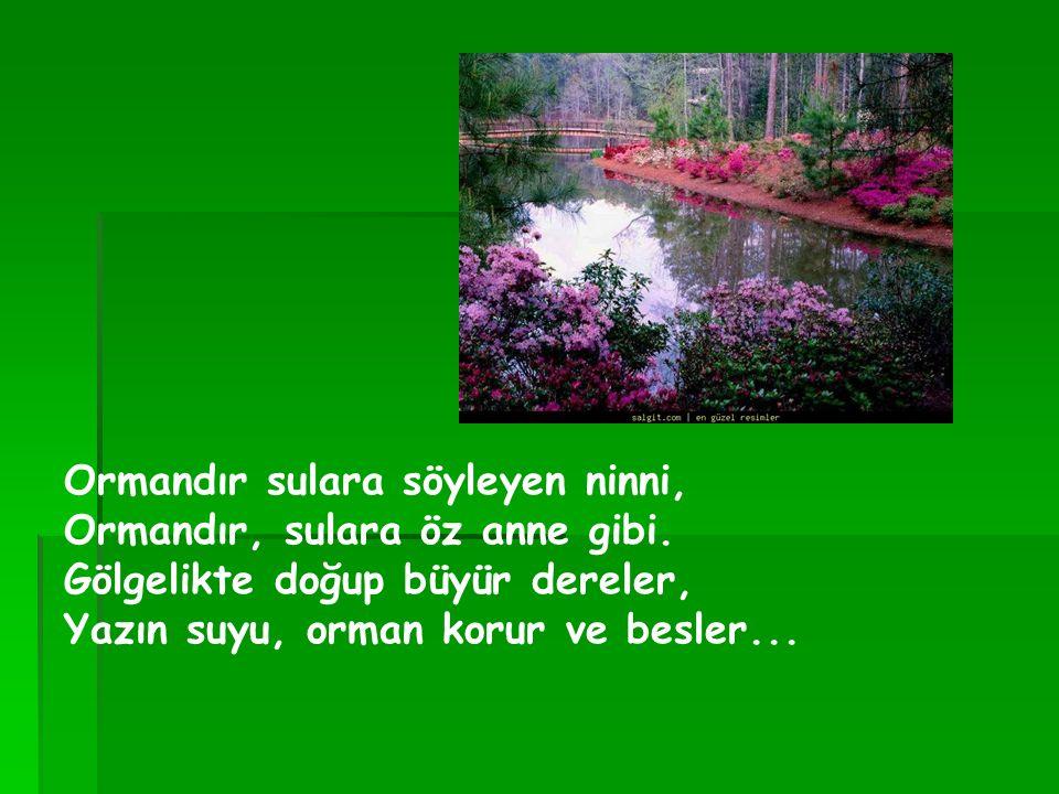 Ormandır sulara söyleyen ninni, Ormandır, sulara öz anne gibi