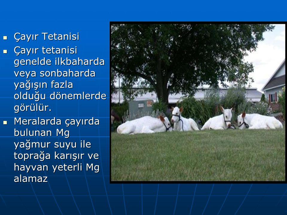 Çayır Tetanisi Çayır tetanisi genelde ilkbaharda veya sonbaharda yağışın fazla olduğu dönemlerde görülür.