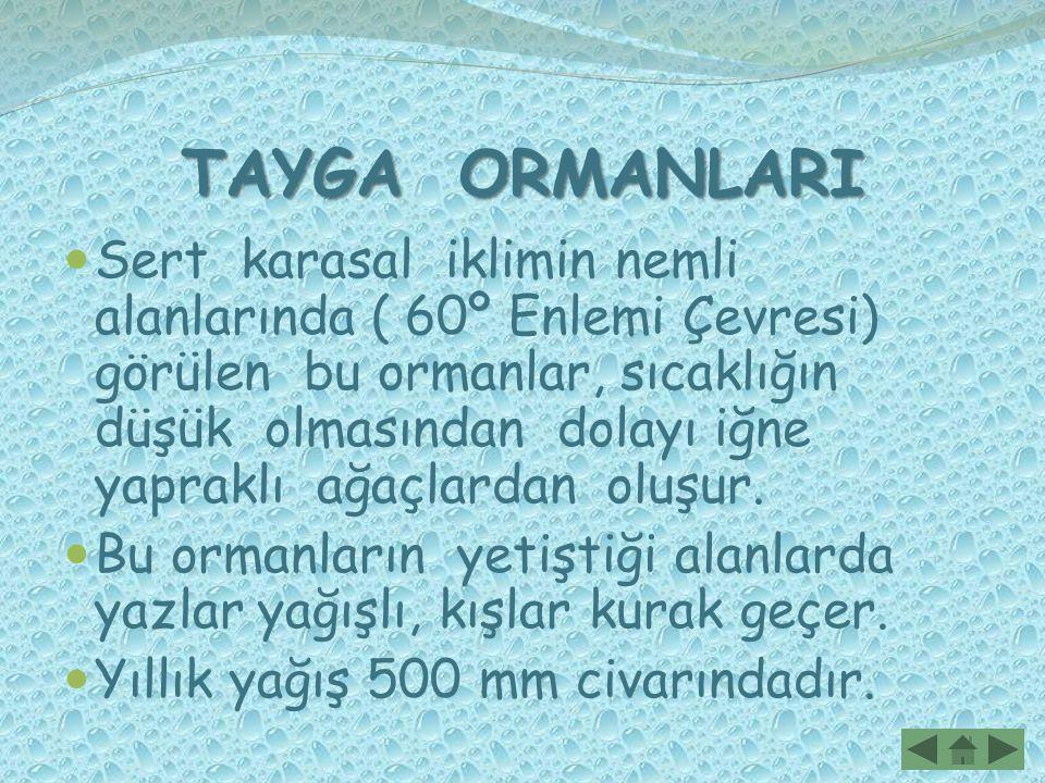 TAYGA ORMANLARI