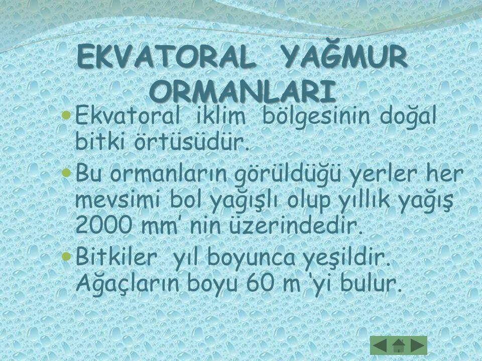EKVATORAL YAĞMUR ORMANLARI