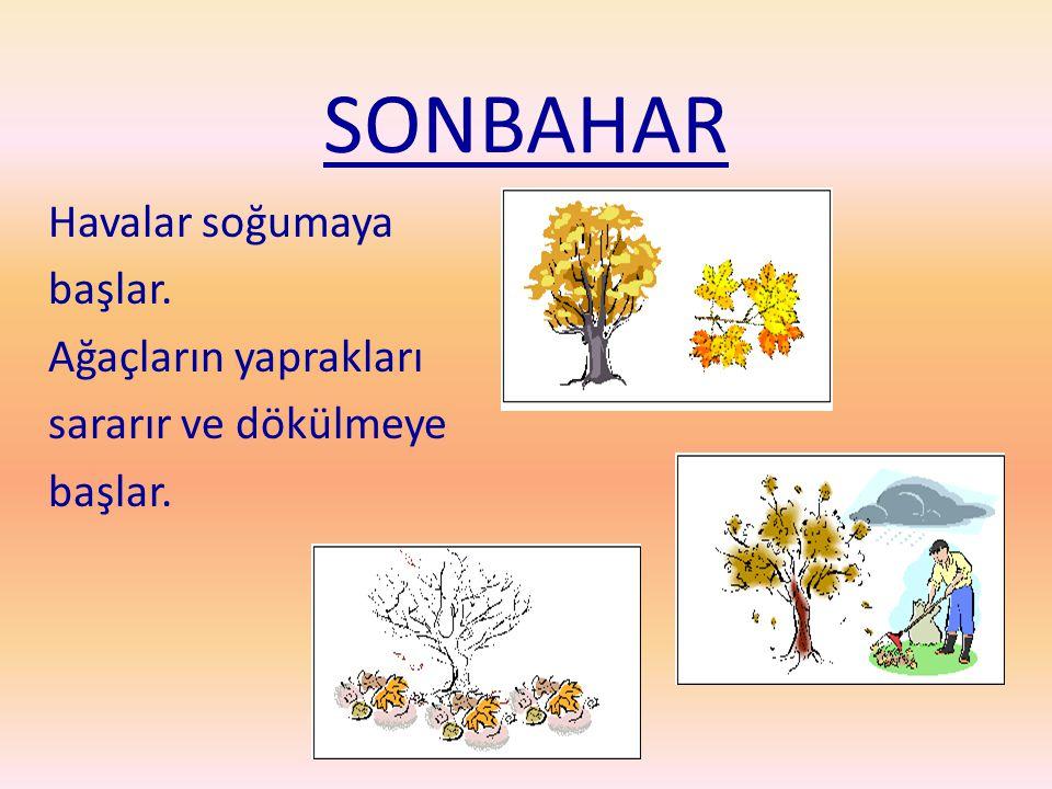 SONBAHAR Havalar soğumaya başlar. Ağaçların yaprakları