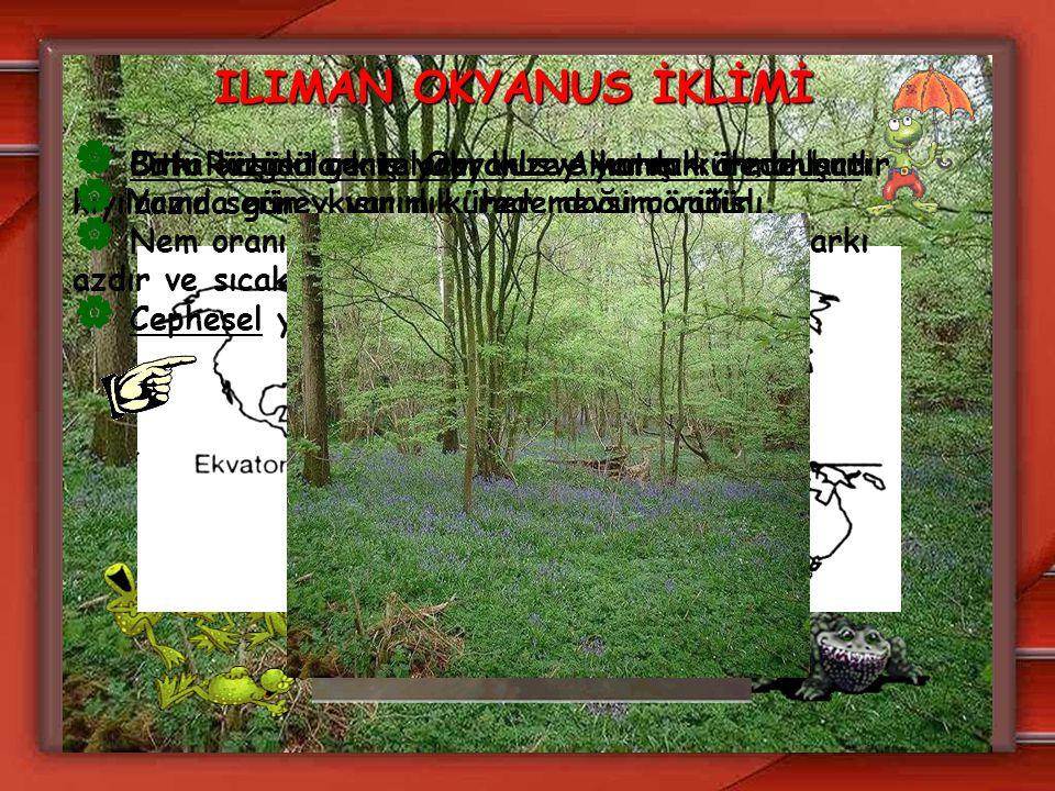 ILIMAN OKYANUS İKLİMİ Bitki örtüsü geniş yapraklı ve karışık ormanlardır.