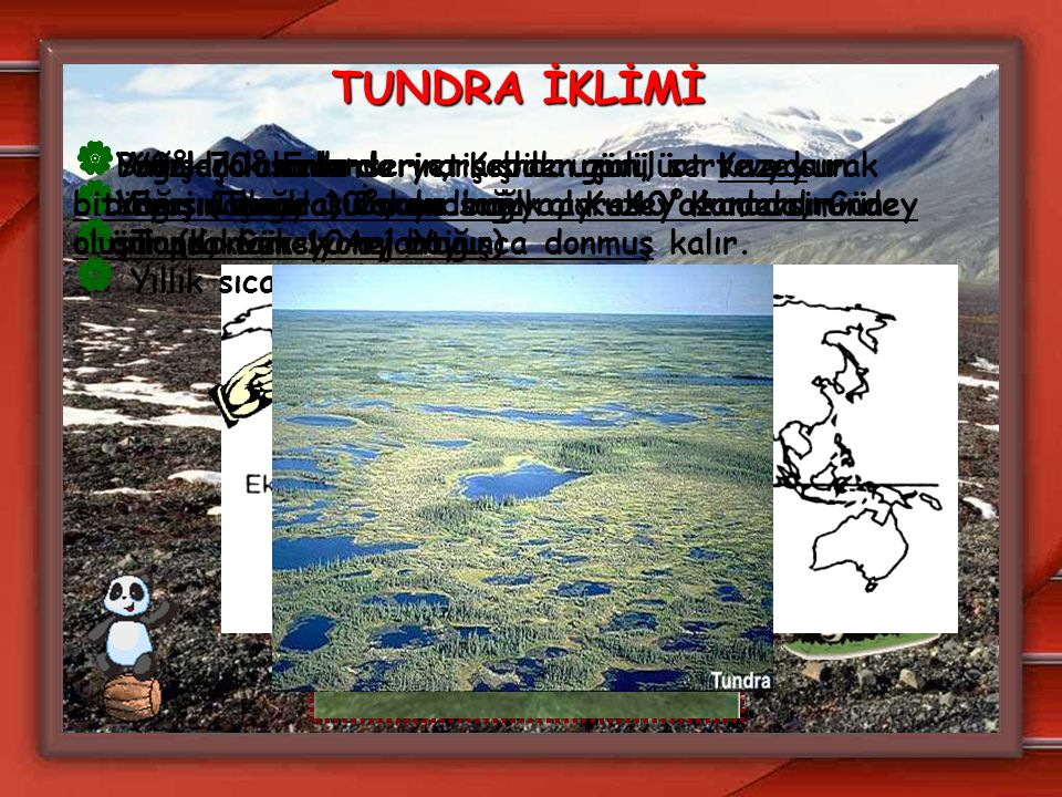 TUNDRA İKLİMİ Bataklık alanlarda yetişebilen çalı, ot ve yosun bitkileri (Tundra) vardır. Yağış çok azdır.