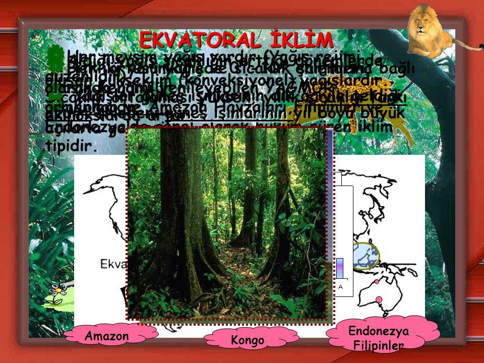 EKVATORAL İKLİM Her mevsim yağış vardır.(Yağış rejimi düzenlidir)
