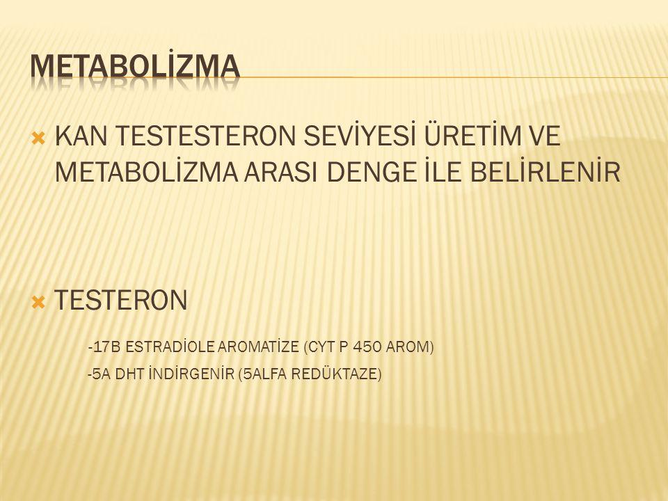 METABOLİZMA KAN TESTESTERON SEVİYESİ ÜRETİM VE METABOLİZMA ARASI DENGE İLE BELİRLENİR. TESTERON. -17B ESTRADİOLE AROMATİZE (CYT P 450 AROM)
