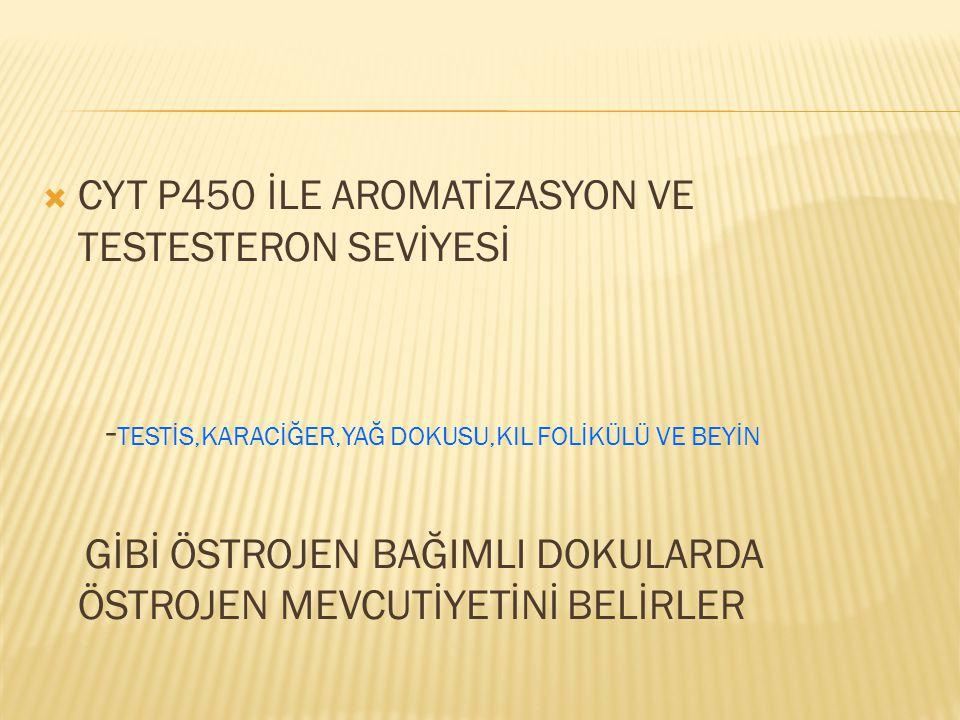 CYT P450 İLE AROMATİZASYON VE TESTESTERON SEVİYESİ