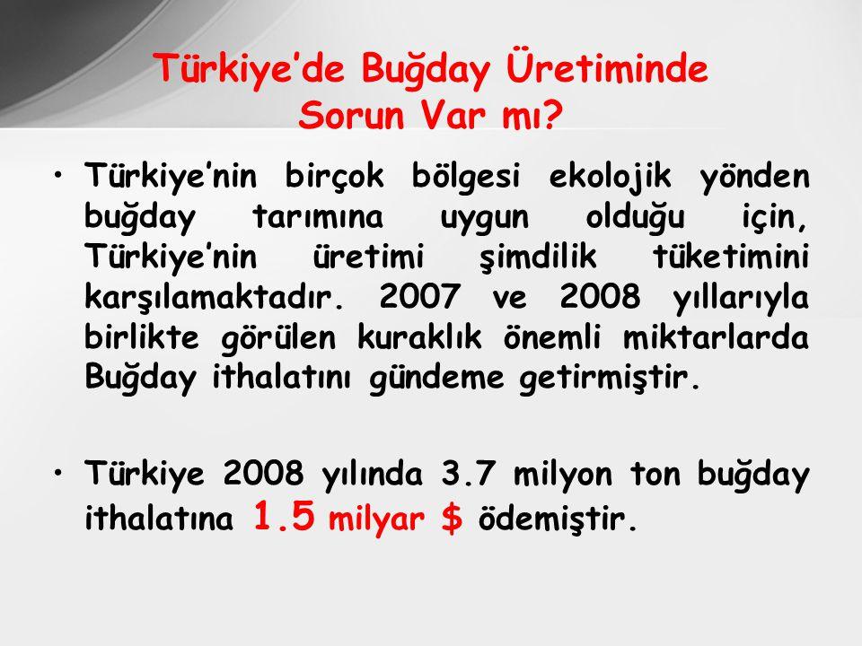 Türkiye'de Buğday Üretiminde Sorun Var mı