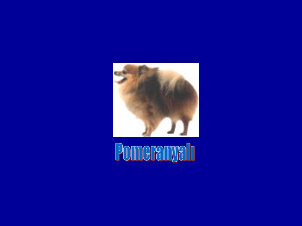 Pomeranyalı
