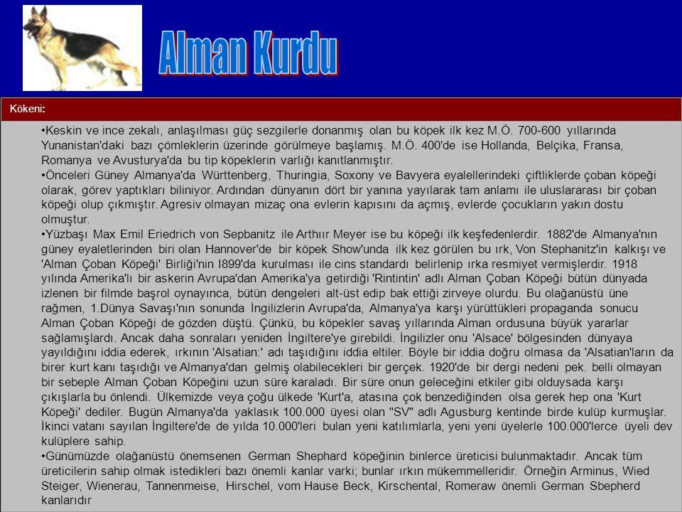 Alman Kurdu Kökeni: