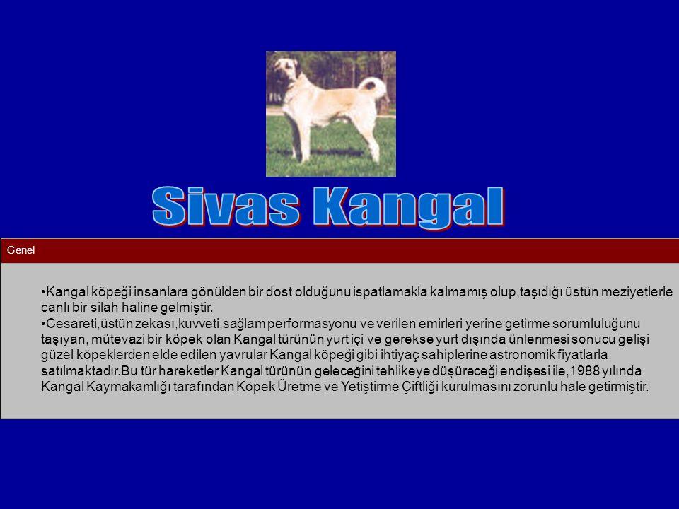 Sivas Kangal Genel.