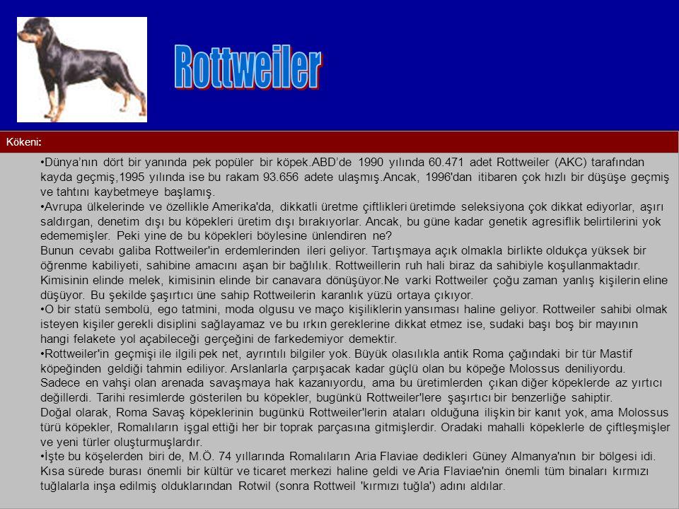 Rottweiler Kökeni: