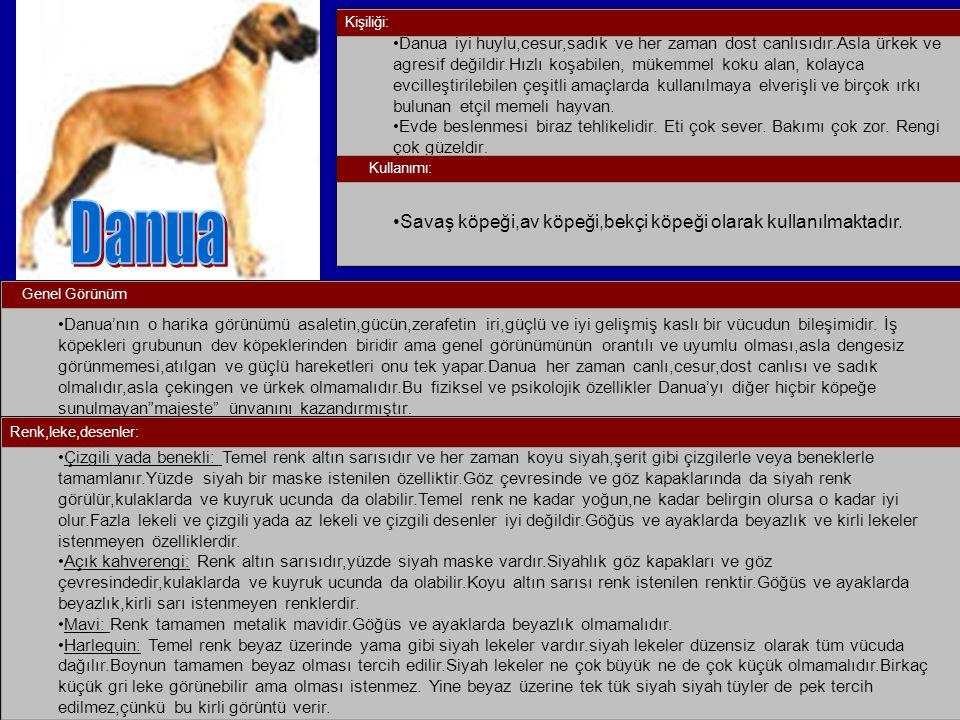 Danua Savaş köpeği,av köpeği,bekçi köpeği olarak kullanılmaktadır.