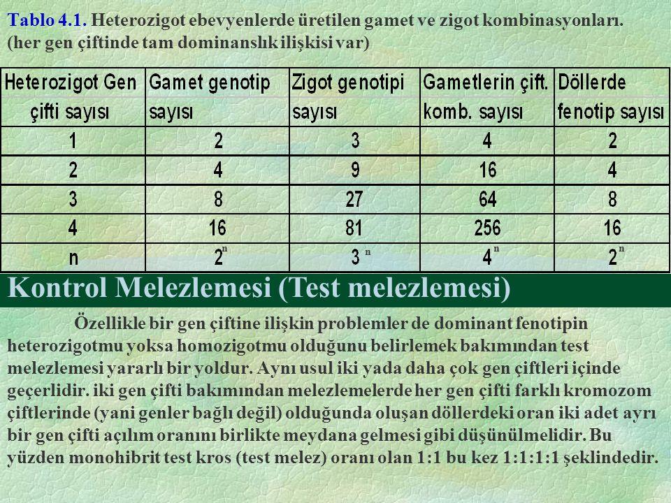 Kontrol Melezlemesi (Test melezlemesi)
