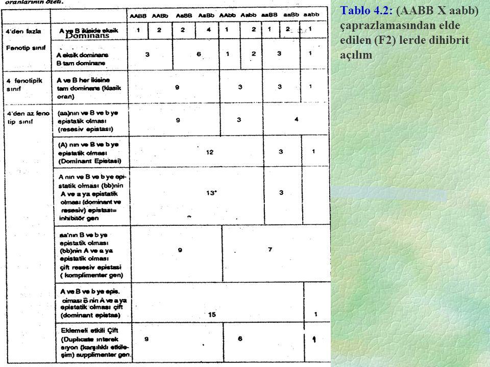Tablo 4.2: (AABB X aabb) çaprazlamasından elde edilen (F2) lerde dihibrit açılım