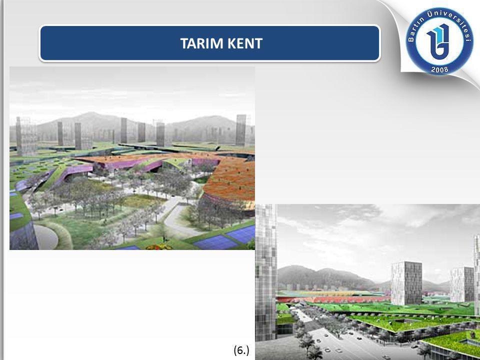 TARIM KENT (6.)