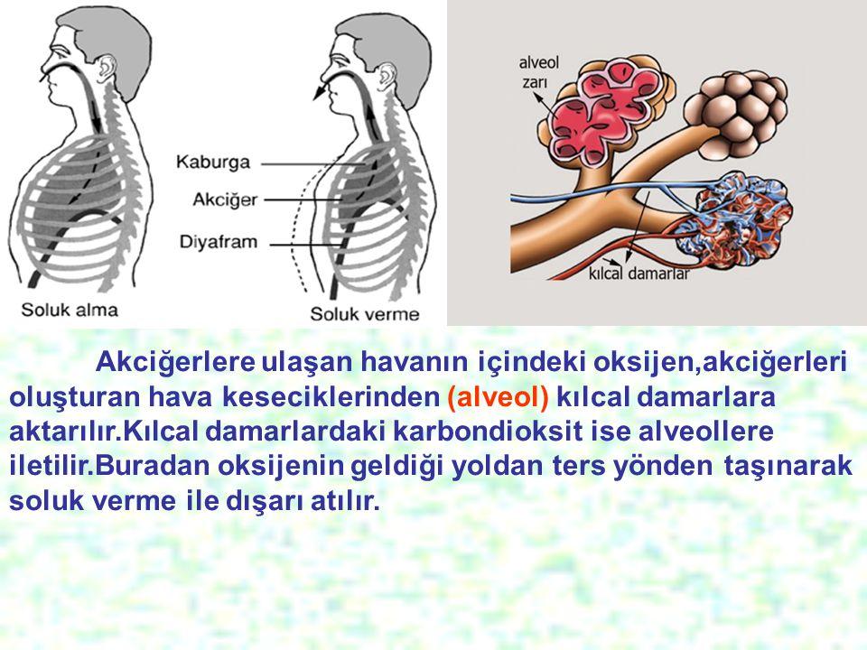 Akciğerlere ulaşan havanın içindeki oksijen,akciğerleri oluşturan hava keseciklerinden (alveol) kılcal damarlara aktarılır.Kılcal damarlardaki karbondioksit ise alveollere iletilir.Buradan oksijenin geldiği yoldan ters yönden taşınarak soluk verme ile dışarı atılır.