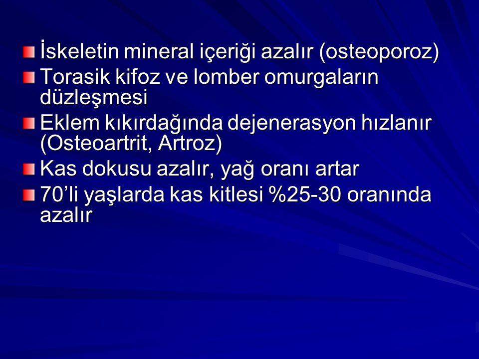 İskeletin mineral içeriği azalır (osteoporoz)