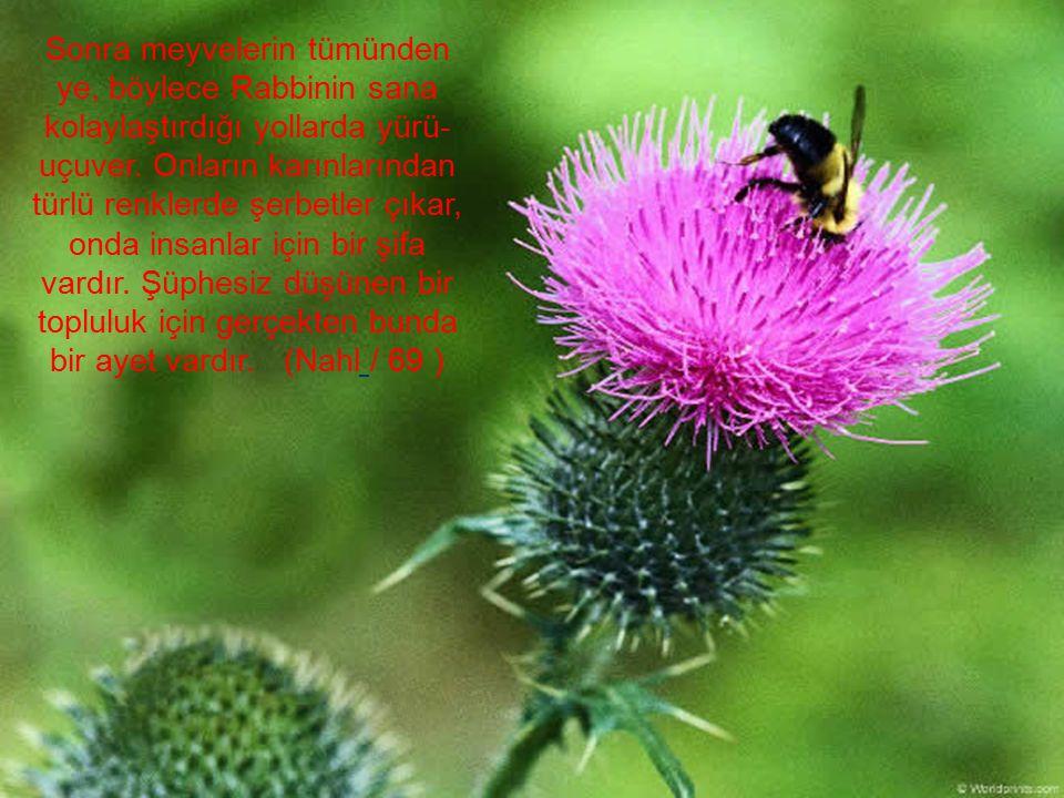 Sonra meyvelerin tümünden ye, böylece Rabbinin sana kolaylaştırdığı yollarda yürü-uçuver.