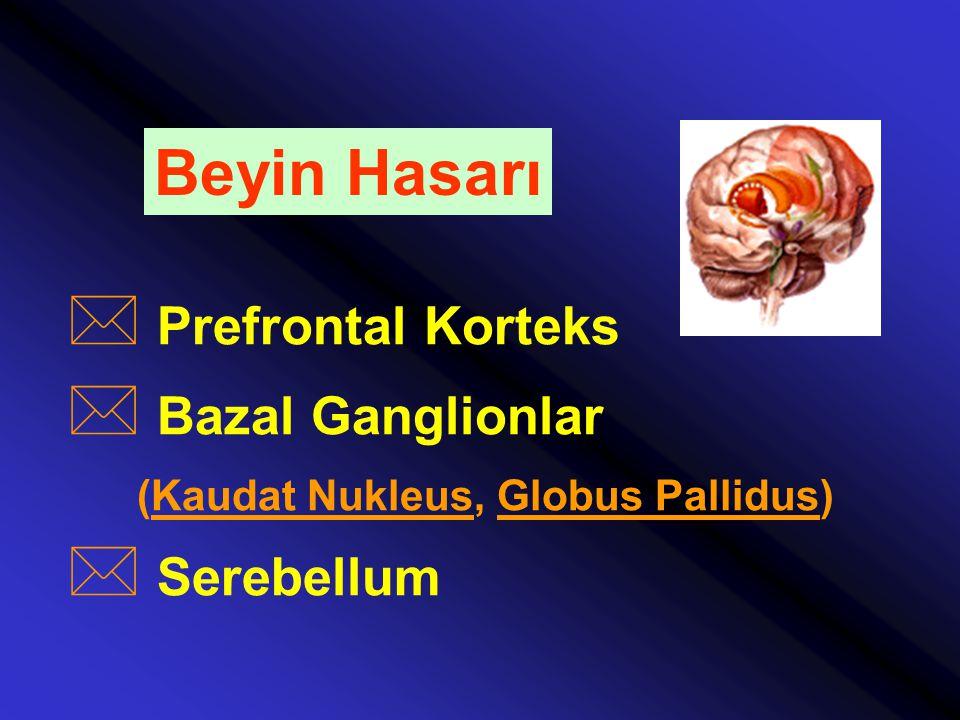 Beyin Hasarı Prefrontal Korteks Bazal Ganglionlar Serebellum