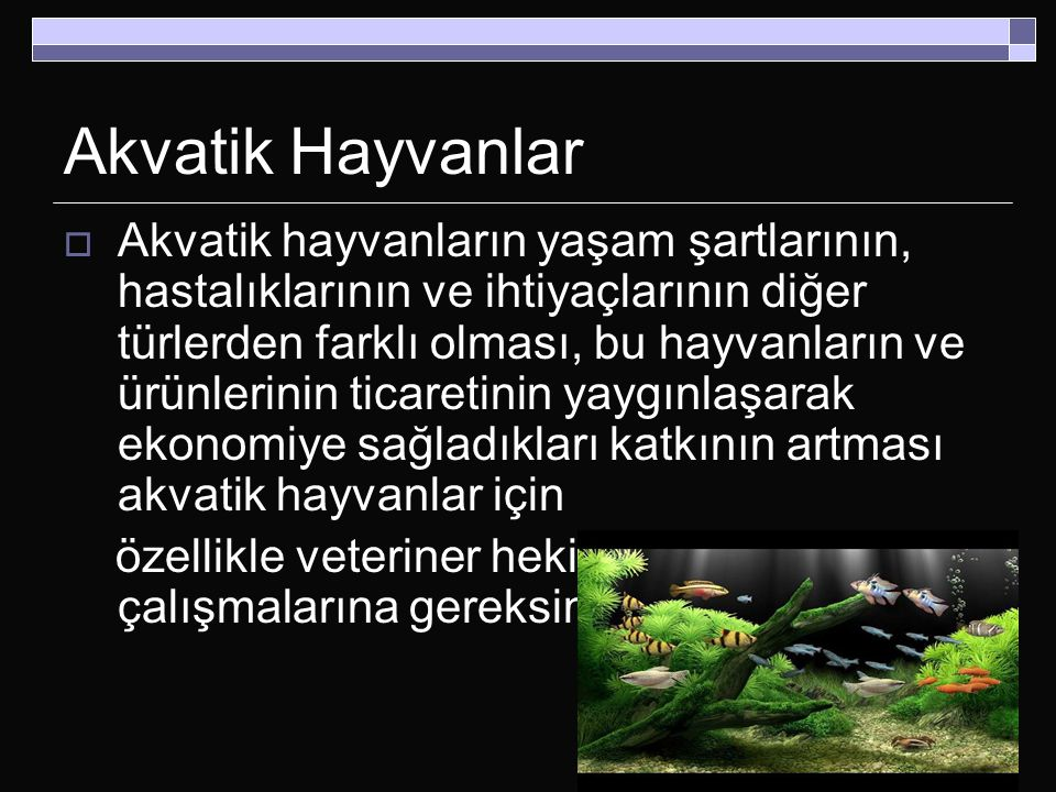 Akvatik Hayvanlar