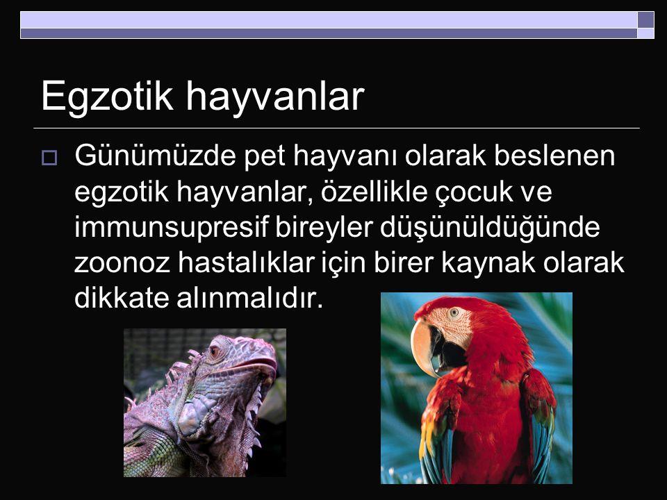 Egzotik hayvanlar