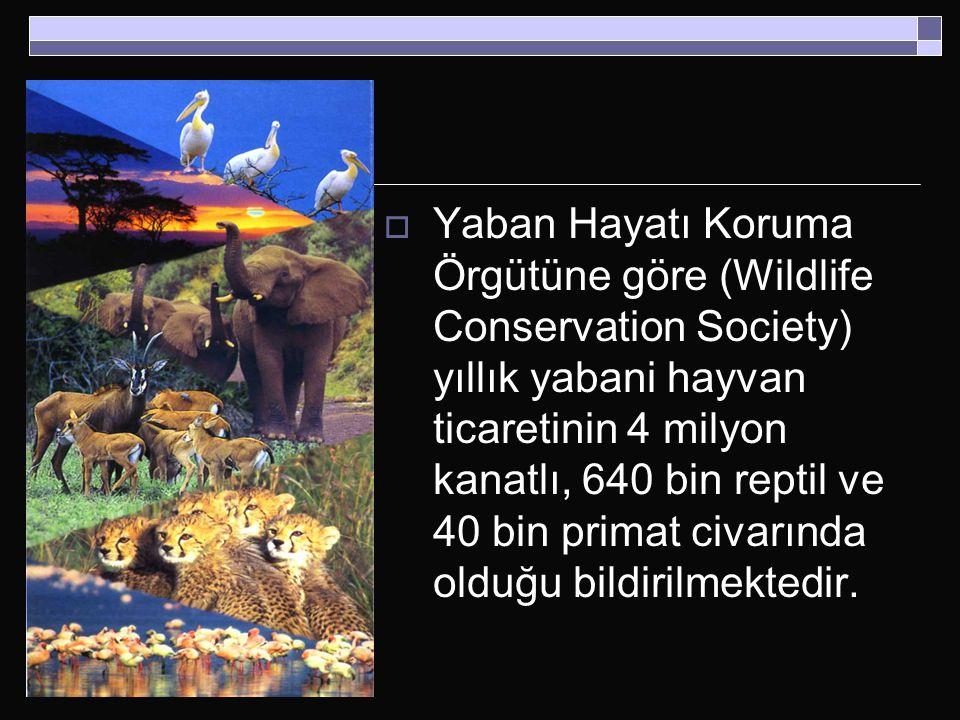 Yaban Hayatı Koruma Örgütüne göre (Wildlife Conservation Society) yıllık yabani hayvan ticaretinin 4 milyon kanatlı, 640 bin reptil ve 40 bin primat civarında olduğu bildirilmektedir.