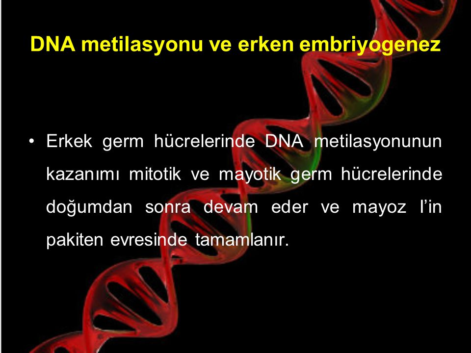 DNA metilasyonu ve erken embriyogenez