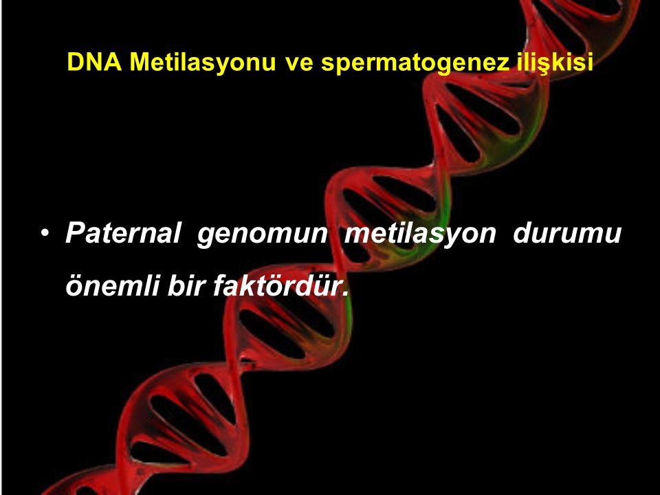 DNA Metilasyonu ve spermatogenez ilişkisi