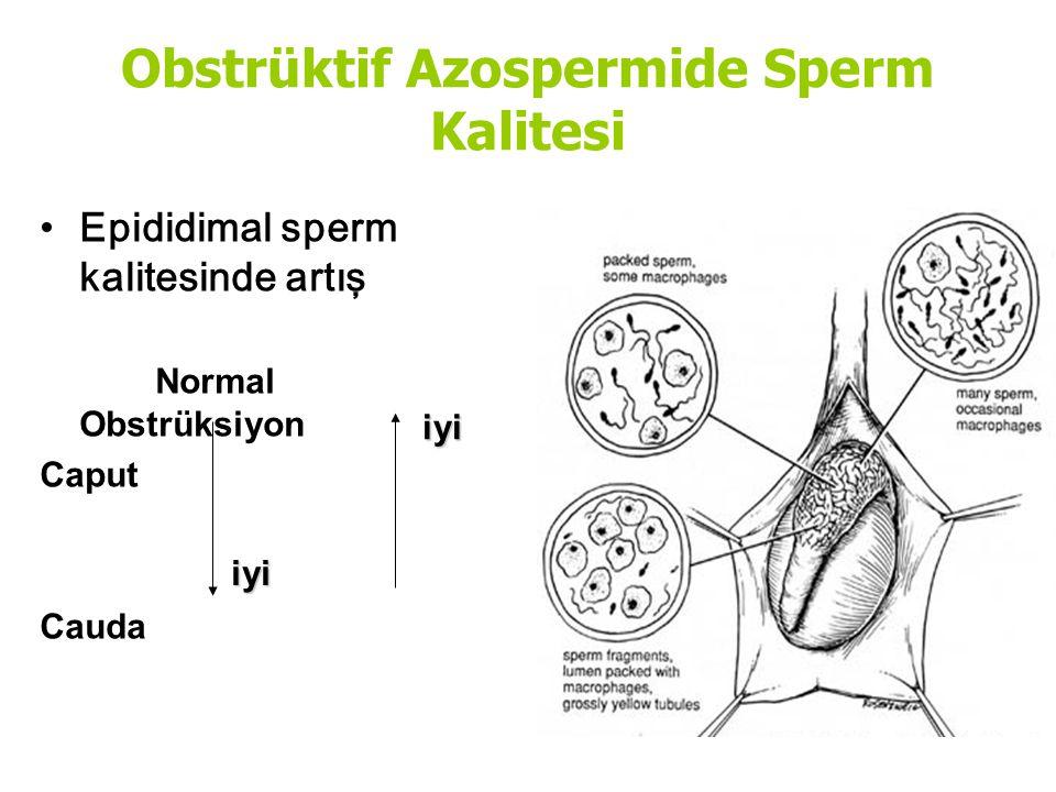 Obstrüktif Azospermide Sperm Kalitesi