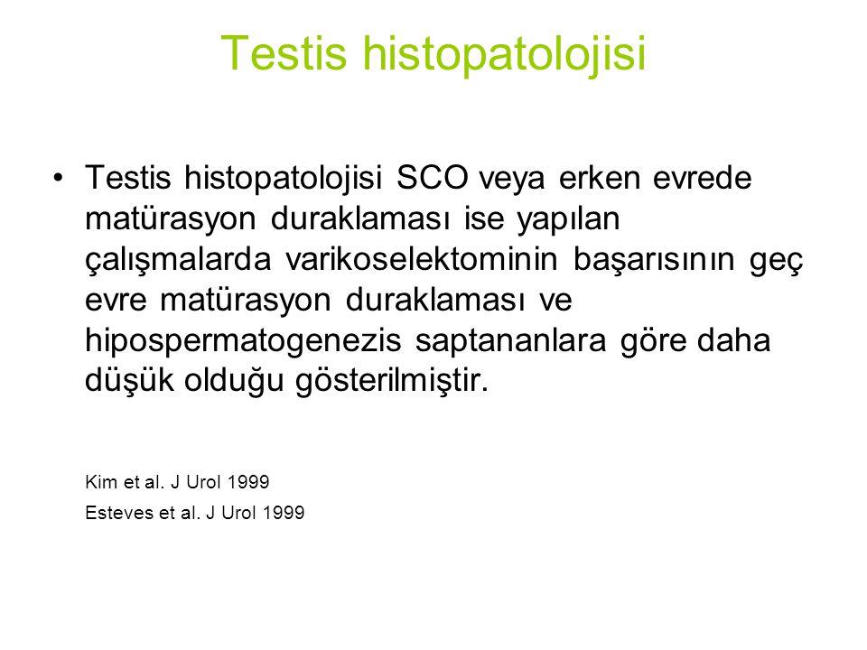 Testis histopatolojisi