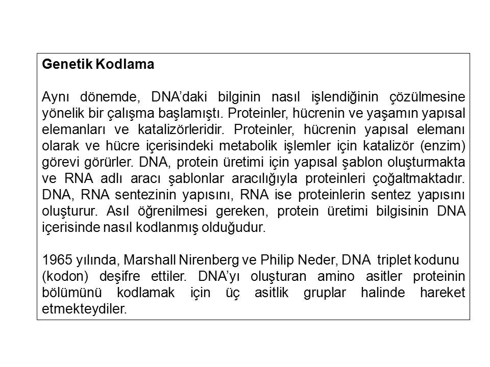 Genetik Kodlama